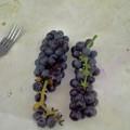 грозди сегодня.jpg