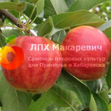 Яблоня 3-2-1