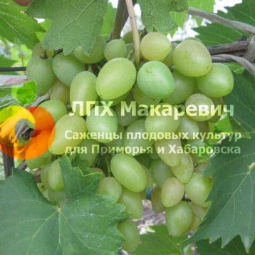 Виноград Церковные купола