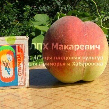 Персик Днепровский