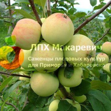 Грушовка Восточная Яблоня
