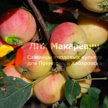 Яблоня Налив Амурский