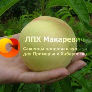 Персик Осенний крупный