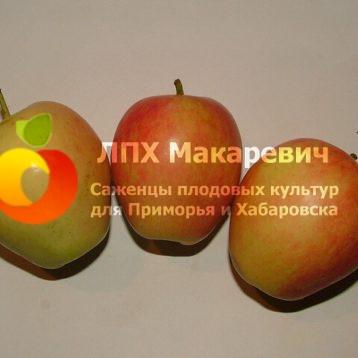 Яблоня Розмарин Зеленый