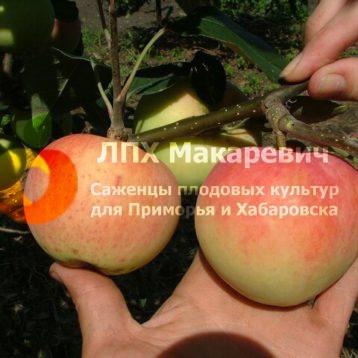 Яблоня Русская Красавица
