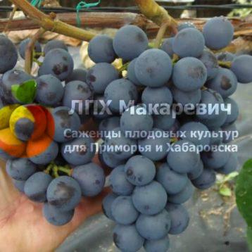Виноград Вильдер