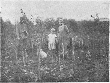 Общий вид крестьянского питомника