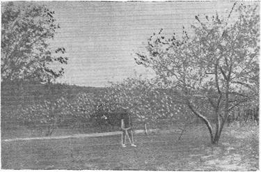 Общий вид плодового сада Старцева