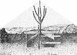 Посадка плодового деревца