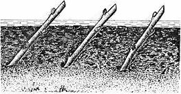 Посадка черенков чёрной смородины