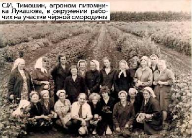 С. И. Тимошин